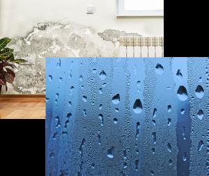 Schimmel und Feuchtigkeit in der Wohnung oder Haus