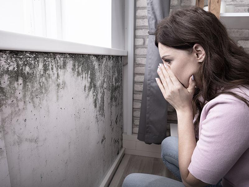 Schimmel und Feuchtigkeit im Haus - Ursachenanalyse von MGN-Pura