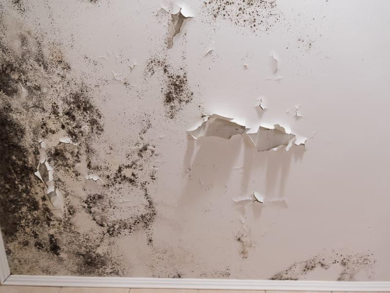 Schimmel im Wohnzimmer - MGN-Pura