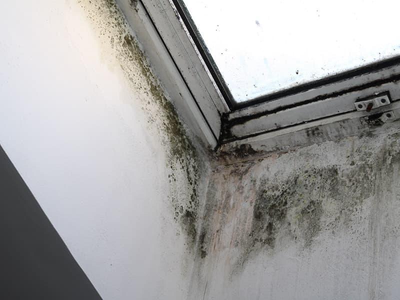 MGN-Pura - Schimmel am Fenster